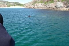 dolphin_traigh_gaille